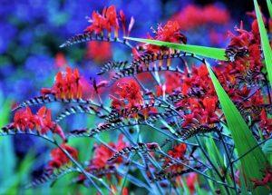 lucifer-fleur-modzik